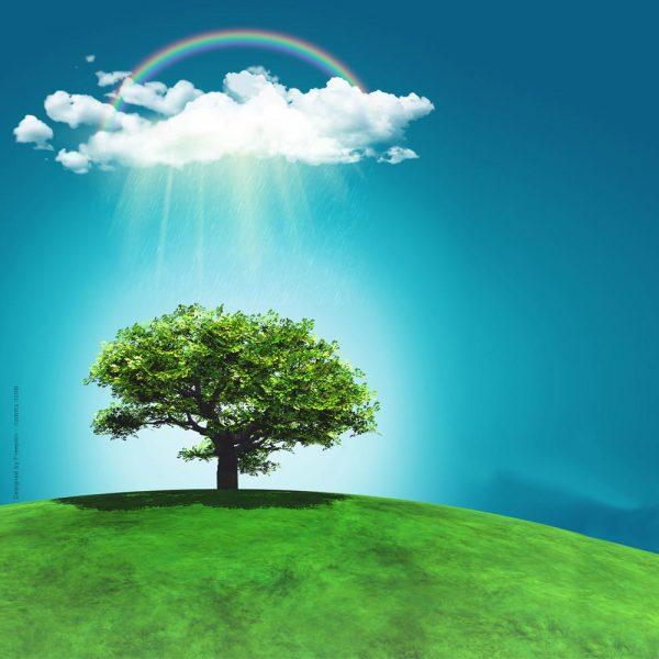 1003- עץ בודד