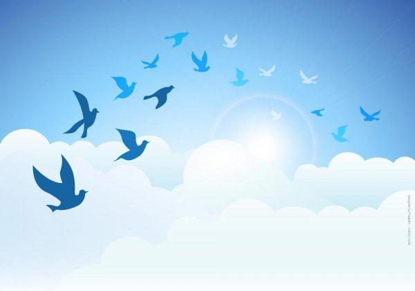 1017-ציפורים בעננים מצויר