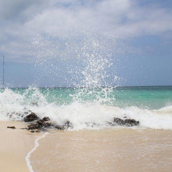 1019-גלים בחוף